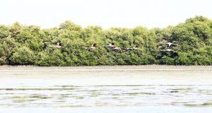 طلبة (الاماراتية الكندية) ينظمون معرض محميات الجزيرة السينية